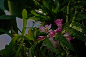 Orchid on the Tree of Life